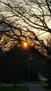 trees, photography, light, sunrise