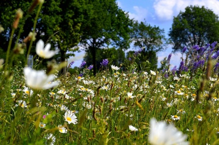 flower-meadow-2367408_960_720